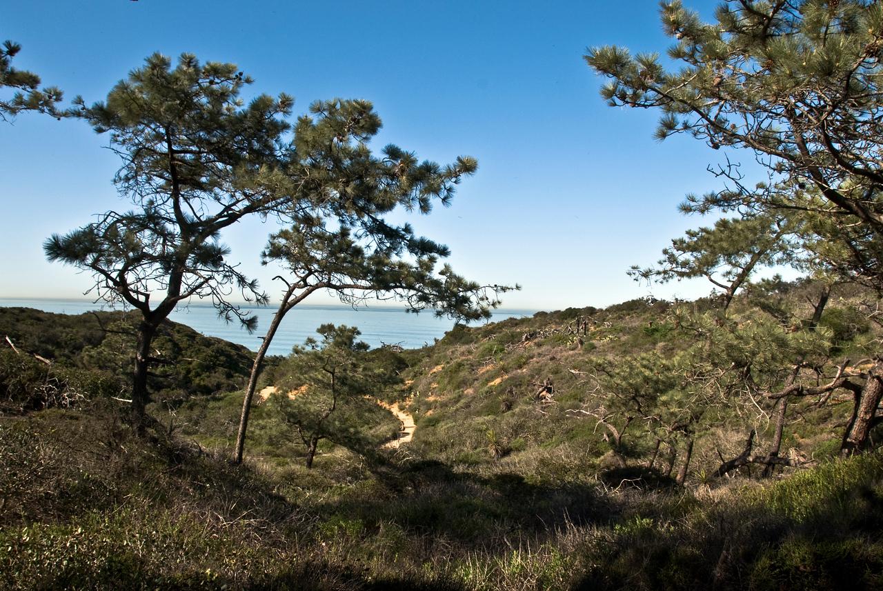 149 Torrey Pines trail