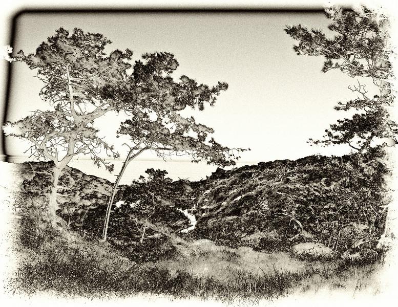 165 Torrey Pines antique solarization