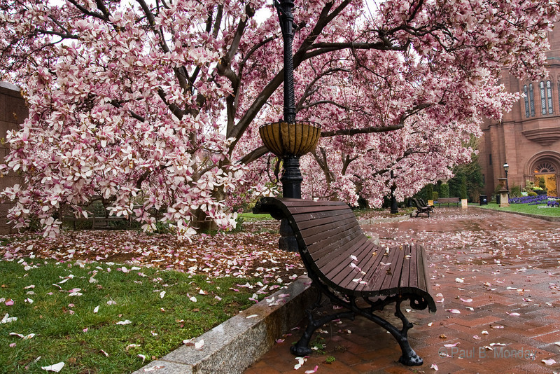 A bench on a wet morning outside of the Smithsonian Castle.