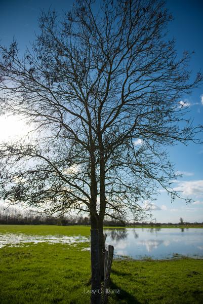 Marais de Loire Atlantique