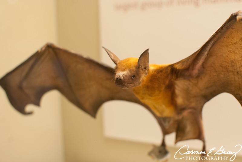 Smithsonian Museum of Natural History ...Taken April 4, 2012