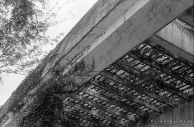 Concrete Trellis