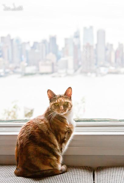 Kitty Not Enjoying the View