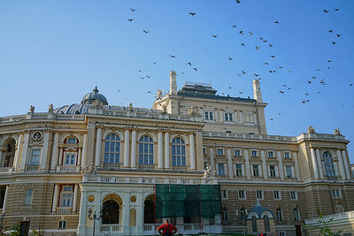 Birds over Opera House in Odessa