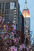 Spring at Madison Square Park