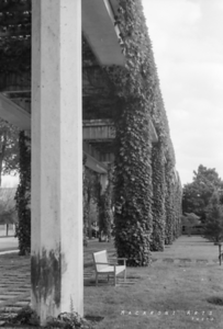 Vined Columns