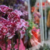 """Photo by Casey Holtz<br /><br /><b>See event details:</b> <a href=""""link to event"""">Chinese New Year Fair</a>"""