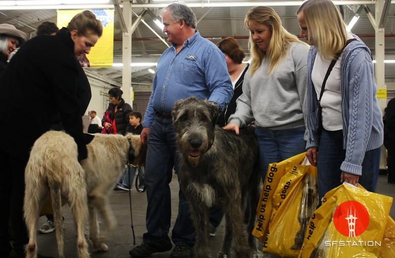 "Photo by Joshua Hernandez <br /><br /> <b>See event details:</b> <a href=""http://www.goldengatekc.com/"">Golden Gate Kennel Club Dog Show</a>"