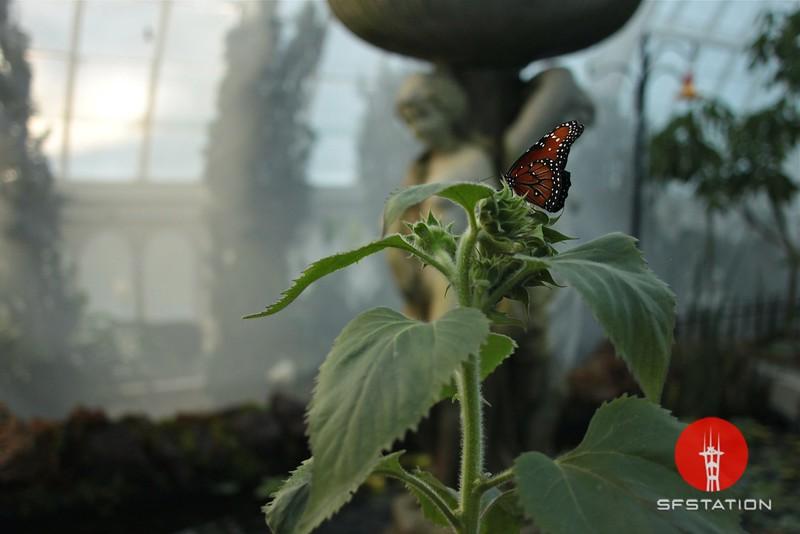 "<b>Photo by</b> <a href=""http://www.derekmacario.com"">Derek Macario</a><br /><br /><b>See event details:</b> <a href=""https://www.facebook.com/events/520029464713657/"">Escape To Paradise!</a><br /><br /><b>Buy my Photo Prints at</b> <a href=""http://derekmacario.bigcartel.com/"">My Online Shop</a>"