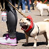 "Photo by Gabriella Gamboa<br /><br /><b>See event details:</b> <a href=""http://www.sfstation.com/million-dog-march-e1932691"">Million Dog March</a>"