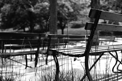 green bench eden park bw may 2011