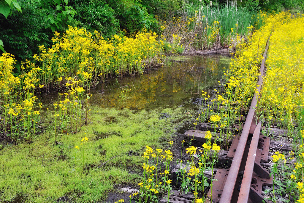 longworth tracks and flowers 4 april 2012