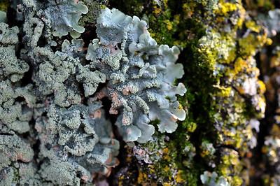 botanical_1839 august 2011