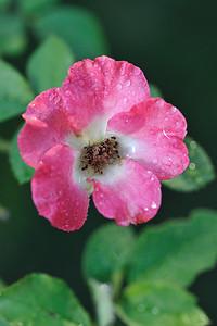 botanical_1889 august 2011