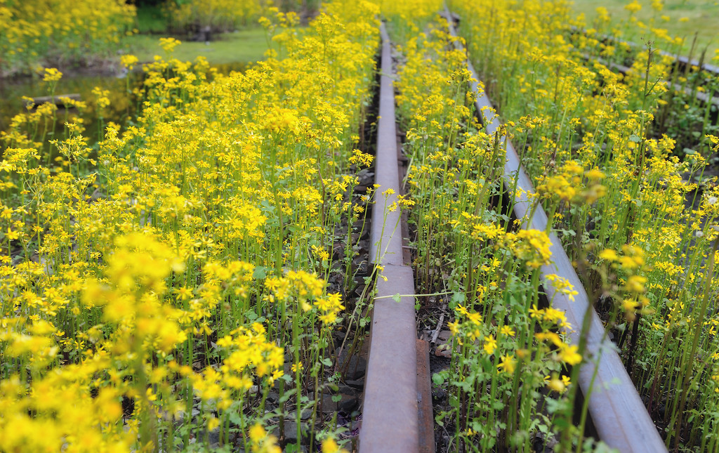 longworth tracks and flowers 5 april 2012
