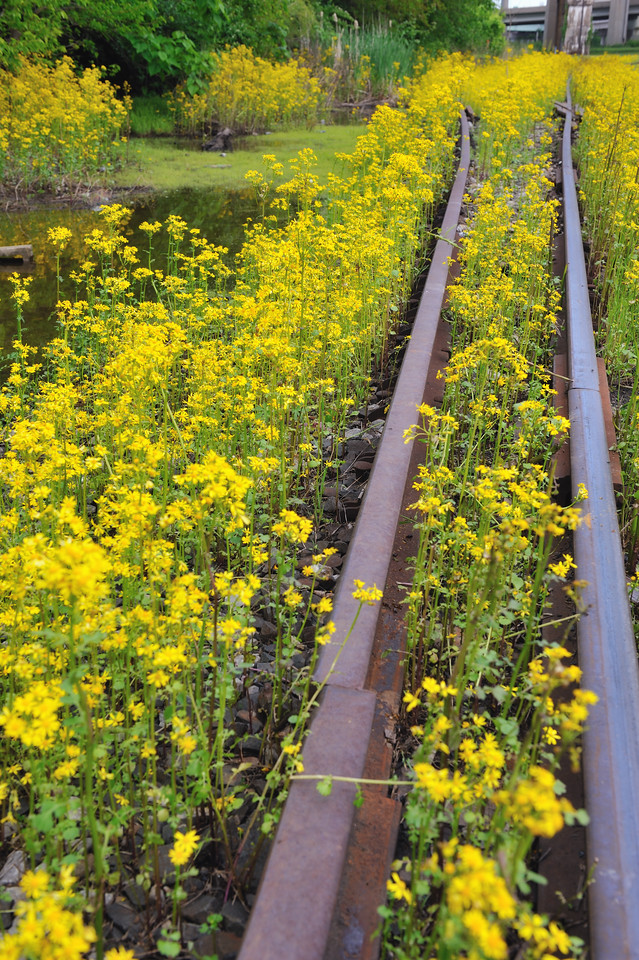 longworth tracks and flowers 2 april 2012