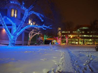 City Hall Park - Christmas