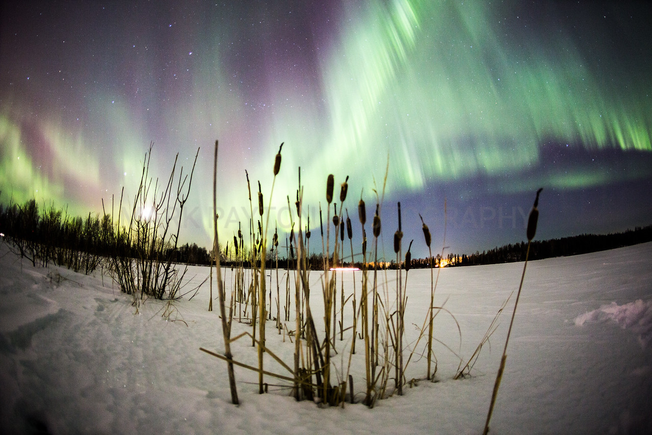 Aurora over Cattails<br /> <br /> Canon 5D MK III<br /> Canon EF 15mm f/2.8 Fisheye<br /> Anchorage, Alaska