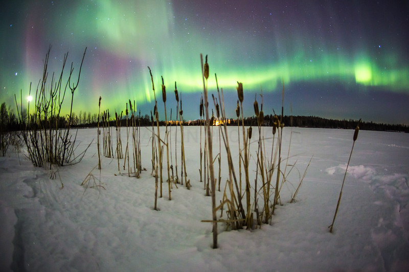 Ribbons of Light     The Aurora Borealis putting on an awesome display in the sky over 6Mile lake near Anchorage, Alaska  Canon 5D MK III Canon EF 15mm f/2.8 Fisheye Anchorage, Alaska