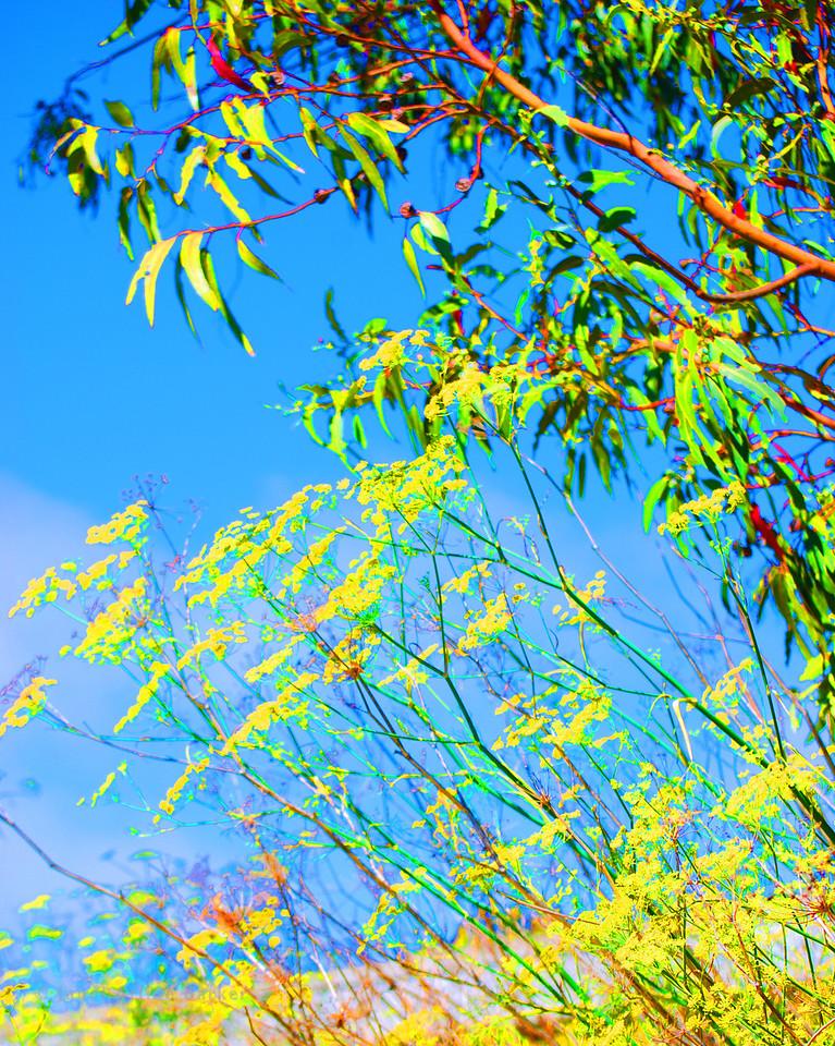04-DSC_0086-colored 8x10