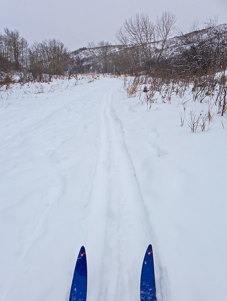 Entering Bowmont Park, following a skier tracked trail.