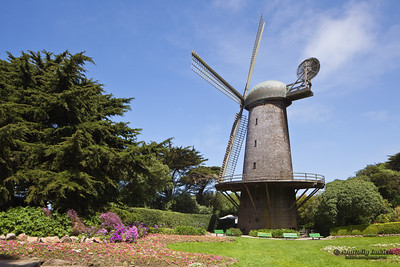 "Dutch Windmill (1903), San Francisco, CA.  The Queen Wilhelmina Tulip Gardens surround the windmill. Dutch Windmill, sometimes referred to as the ""North Windmill"", the first Golden Gate Park windmill stands 75 feet tall with 102 foot long spars, and was built to pump up to 30,000 gallons an hour of well water for irrigation purposes."