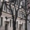 Baton Trees,<br /> Scleppegrellsgade, København, Danmark.