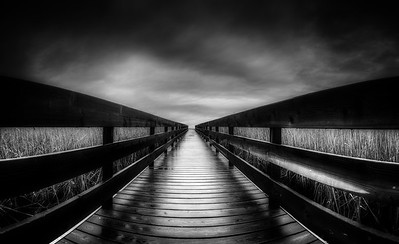 Mer Bleue Boardwalk in Black and White