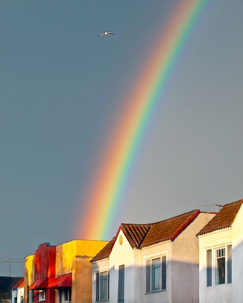 seagull flying over a rainbow