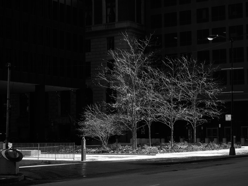 City Tree Glow