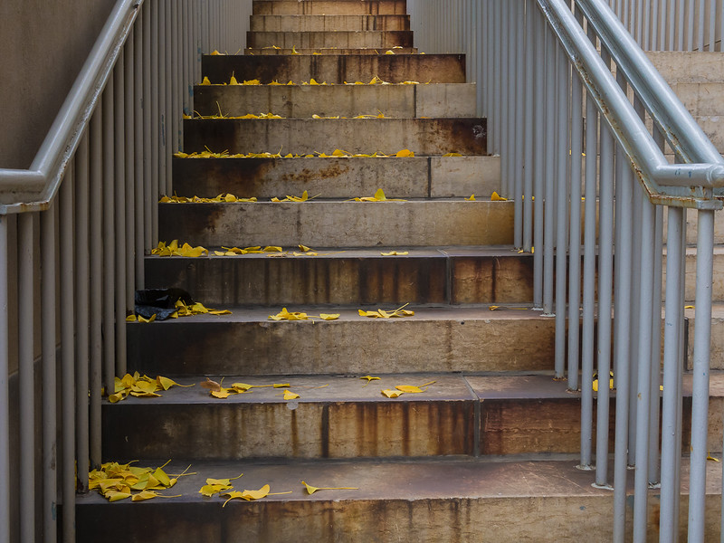 Ginko Leaves on Stairs