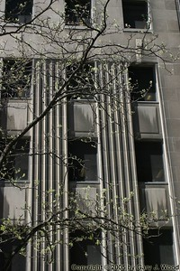 Tree And Office, Toronto