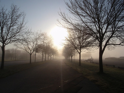 Misty Morning on Lakeshore Blvd