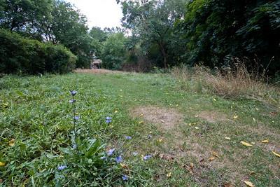 Chicory Landscape