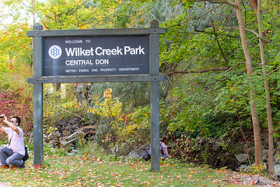 An Autumn Walk Through Wilket Creek Park