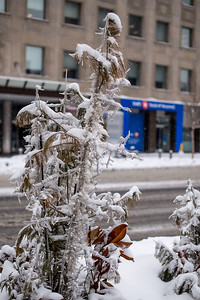 A Winter Walk On Bloor Street East