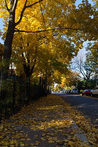 Cabbagetown Fall Colours