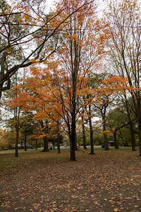 Fall Colours In High Park 2017