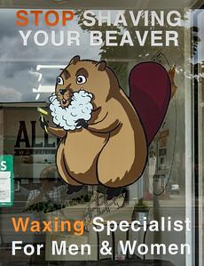 Beaver Shaving!