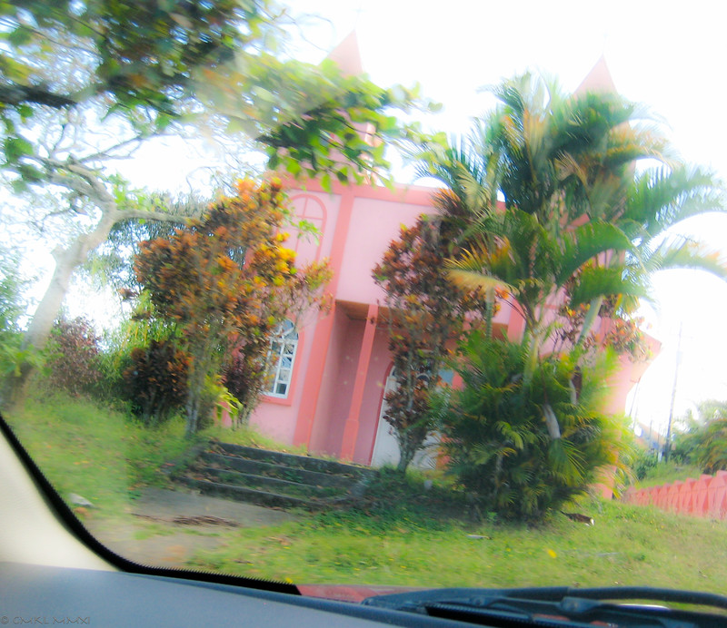 Driving the switchbacks up to Candeleria - a shocking pink glimpse in a sharp right turn