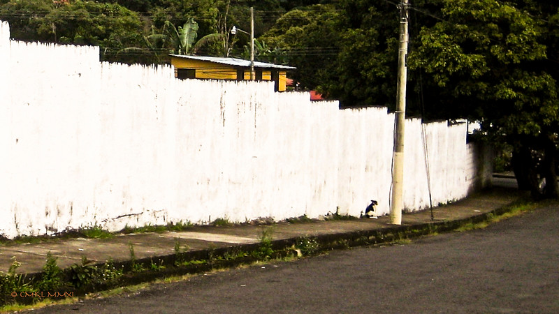 Once more my 'Urban Dweller' - A little black and white dog, taking her siesta whilst leaning against the scruffy cemetery wall. This picture was taken in November of 2011.