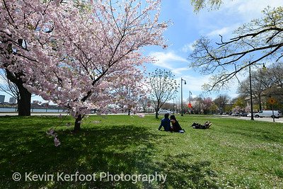 BostonSpring_20150501_1238_018_pp1