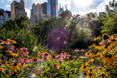 Central Park Color NYC
