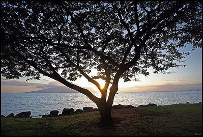 Tree silhouette at sunset  Maui, Hawaii