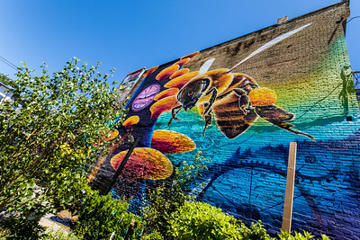 """Bees and Urban Pollinators"""