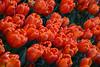 Flowers, Rockefeller Plaza