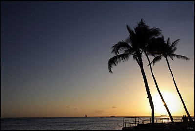 Palm Trees and Sunset, Waikiki Beach, Oahu, Hawaii