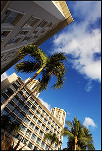 Hotels and Palm Trees, Waikiki Beach, Oahu, Hawaii