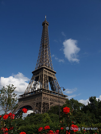 Eiffel Tower with Red Roses in foreground