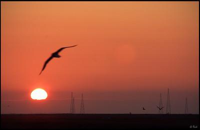 Sunset at Alviso Marina, Alviso Marina County Park